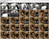http://img243.imagevenue.com/loc106/th_79462_Indecentwomenrestroomsonanism.avi_thumbs_2013.08.16_01.39.16_123_106lo.jpg