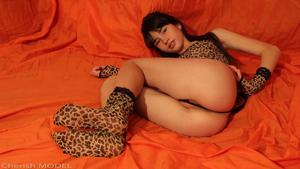 ArtModelingStudio – Cherish Model – Cutest Cheetah in the World